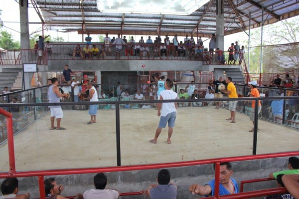 Siquijor Cockfighting