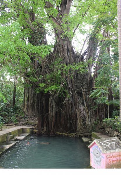 Enchanted Tree - 400 year old Balete tree