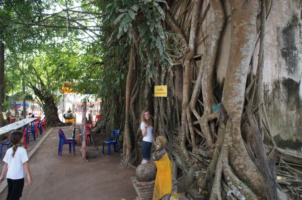 Wat Bang Kung Wat Bang Kung...a small chapel that is completely enclosed within the roots of a banyan tree