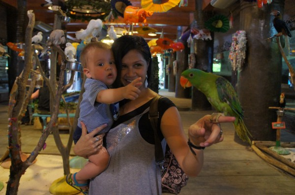 The kids enjoyed a day at Ark Avalon where we were able to feed fish, hold birds and a python.  Sadly, Jenny the orangutan was getting a physical so we didn't get to meet her.