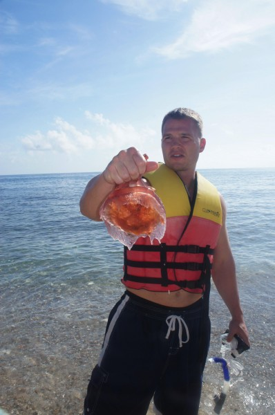 We saw some jelleyfish and some got stung by them while swimming.  But, we also saw sea turtles since they eat jellyfish