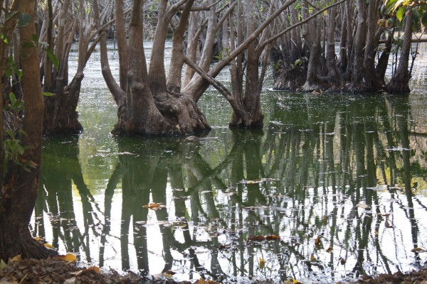 We passed by this lagoon on our hike and spotted some monitor lizards...can you find them?