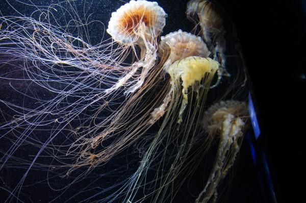 Day 2: S.E.A. Aquarium in Sentosa
