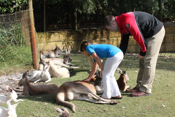 Day 6 we went to Caversham Wildlife Park where dreams came true of touching kangaroos and koalas.