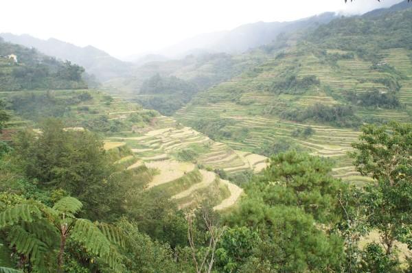 Banaue Rice Terraces