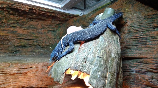 Predator vs. Prey. We were in the reptile exhibit during feeding time.