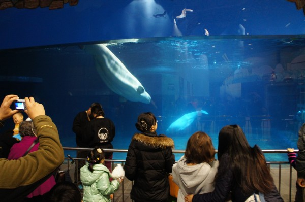We visited the aquarium where we saw Beluga whales and heard the loud noises that they make