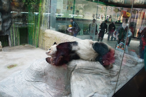 Of course we had to visit the zoo to see giant pandas in their home country