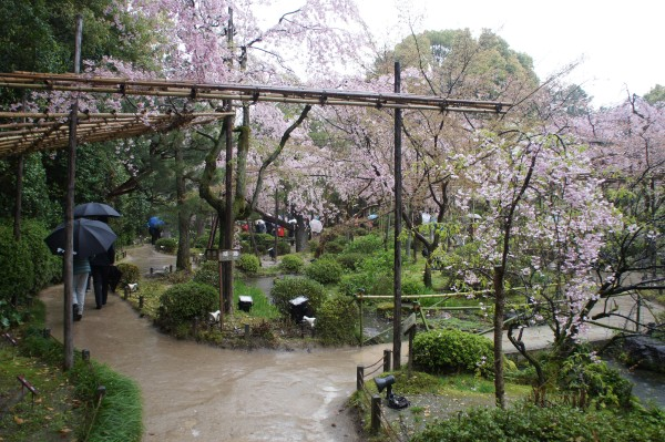 It was rainy while we visited Heian Shrine, but the gardens were so lovely.