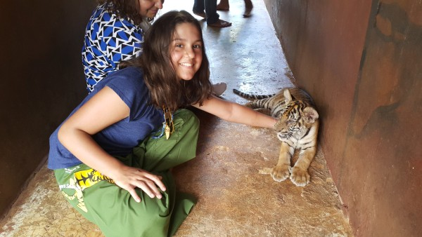 We were able to go in a small group and feed and play with tiger cubs. Kalani liked to play with this two month old cub. Baby Blake was not allowed in this part and stayed with our tour guide.