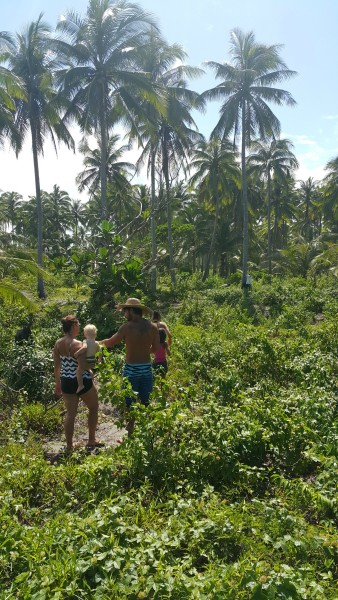 After lunch we walked to another area of the property to have a friend climb up the tree and get us some coconuts.