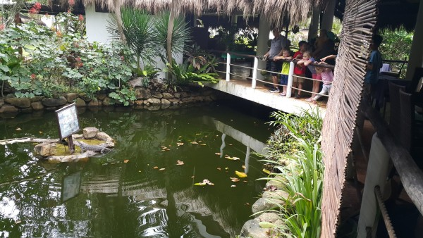 We went to Daluyon Resort for lunch and saw a monitor lizard. The kids were all very impressed.