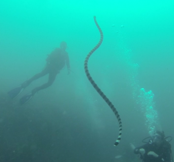 We watched this really long sea snake rise from the bottom of the ocean floor.
