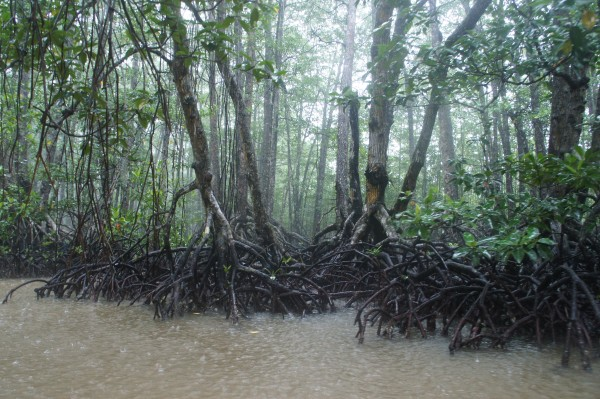 We did a mangrove tour and saw 2 different snakes in the trees...and we got wet with another downpour.