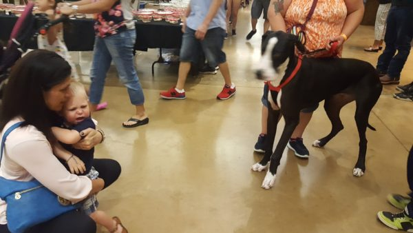 At the reptile show there was a big dog that Blake liked from a distance. But when we put him down next to the dog, he quickly retreated back to his mom's arms.