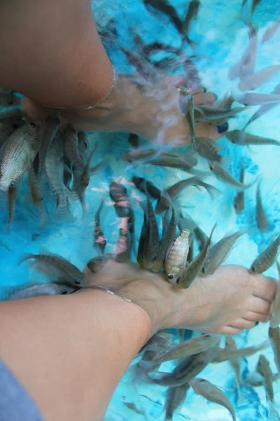We paid the $2 to have fish eat our dead skin cells for 30 minutes.  It tickles a lot!