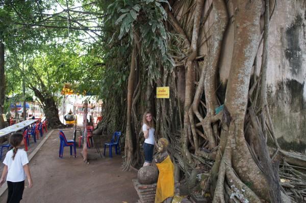 Wat Bang Kung Wat Bang Kung...a small chapel that is completely enclosed within the roots of a banyan tree