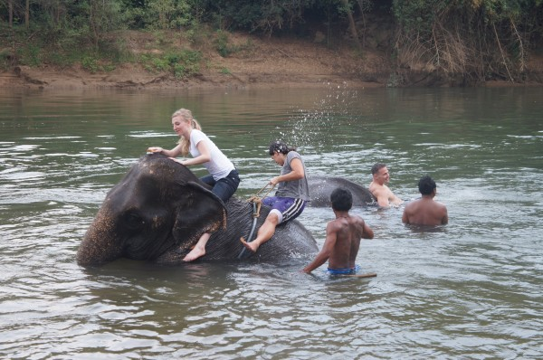 We rode the elephants, brushed them down and played with them...the highlight of the vacation for us