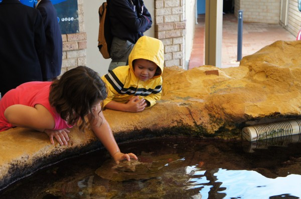 Day 5 was spent at the aquarium.  Mason really liked the touch pool.