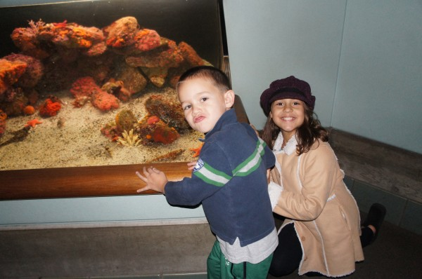 Spent the day at the Monterey Bay Aquarium before family showed up.