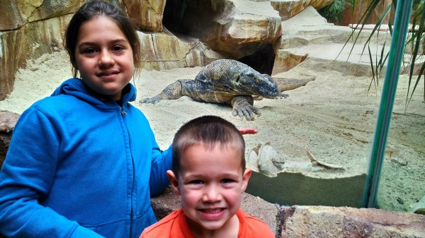 We found a komodo dragon in it's own country at Taman Safari