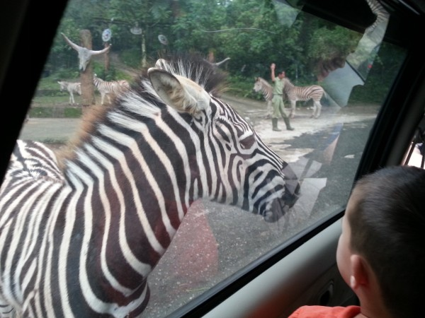 Taman Safari was our first stop of the day where we were able to feed animals from our car window