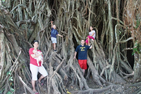 """We got to explore the """"Millennium Balete Tree"""" where you can walk through it since there is a path """"carved out"""". And the kids could have stayed here for a couple of hours climbing all over it"""