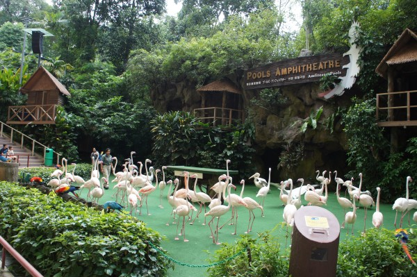Our first destination was Jurong Aviary where we watched 2 different bird shows and got to see lots of different birds.