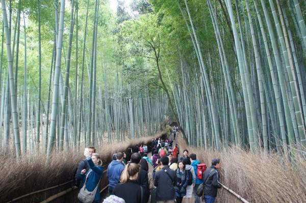 Arashiyama Bamboo Grove is pretty amazing with hundred of bamboos all around.