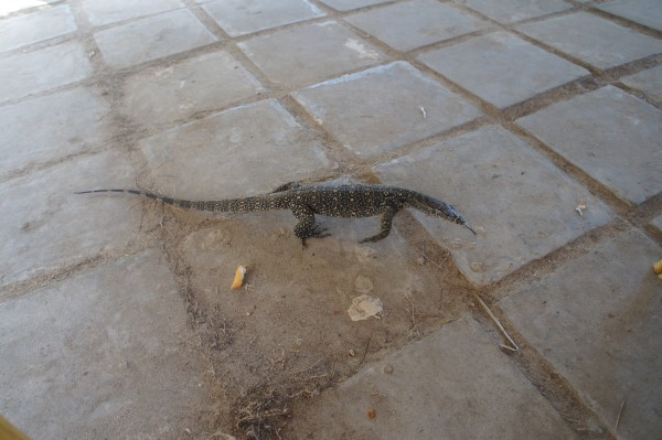 We saw some local wildlife. This monitor lizard was very near our table during breakfast...and Matt may have tried to capture it.