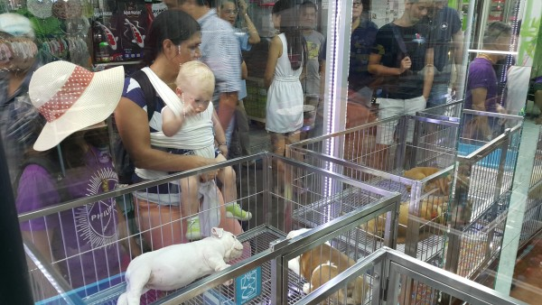 Chatuchak weekend market also has an area where there are dogs and cars for sale. Blake was very excited to see all of the animals.