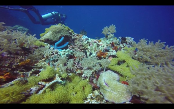 Apo Island has some beautiful coral.