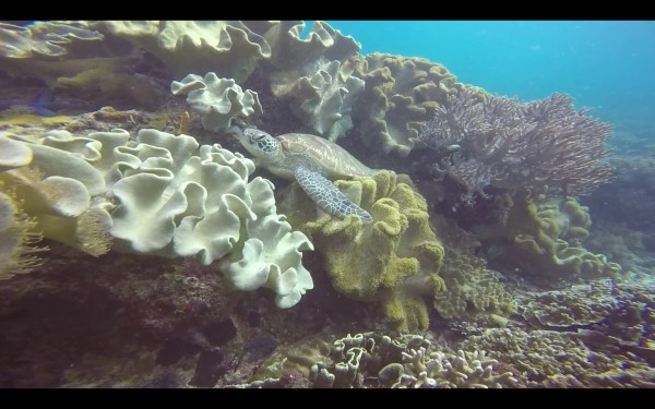We saw a sleeping turtle while scuba diving.