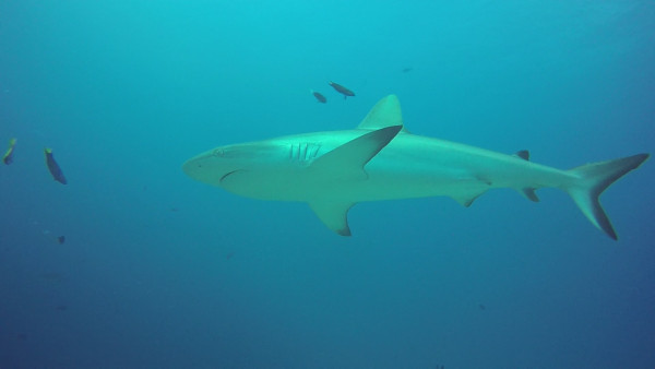 This shark was not scared of us as long as we kept our distance.